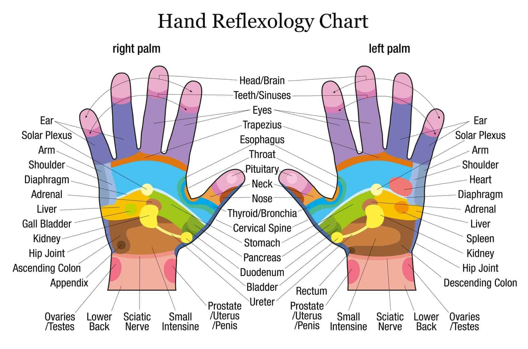 hight resolution of hands reflexology