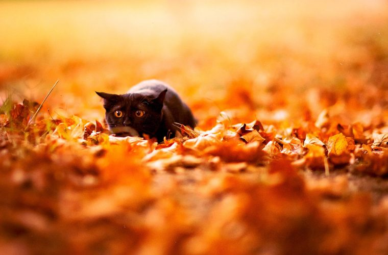 Cute Fall Leaves Wallpaper 10 Cute Animals Playing In Autumn Leaves