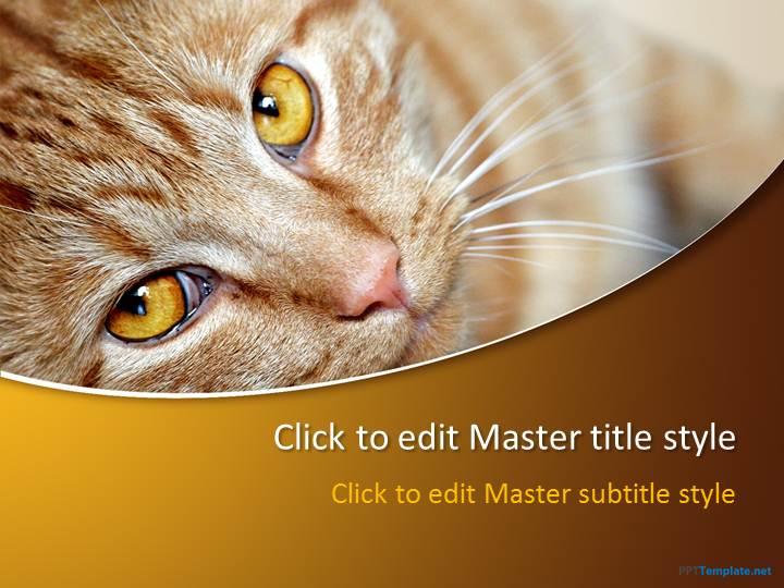 cat ppt template