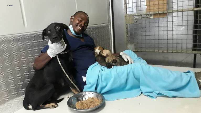 Staff at Khayelitsha animal clinic need urgent support after ...