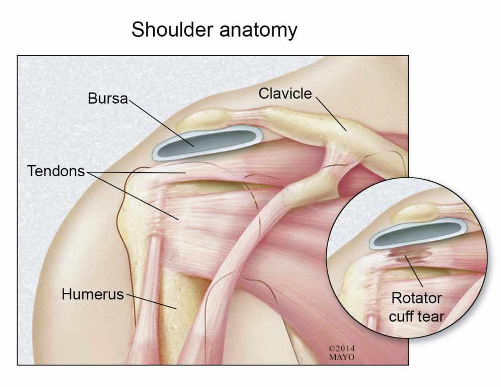 medium resolution of illustration of shoulder anatomy rotator cuff tear