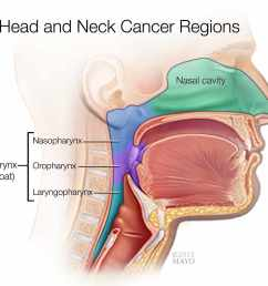 a medical illustrations of the head and neck cancer regions [ 1425 x 1236 Pixel ]