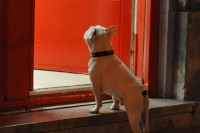 Outdoor Storage Lockers Keep Dogs Safe While You Shop - PSFK