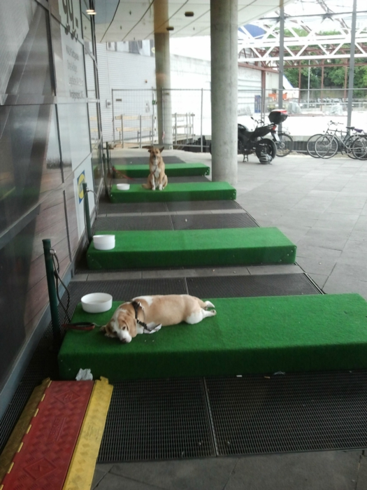 ambient-ikea-dog-parking-lots