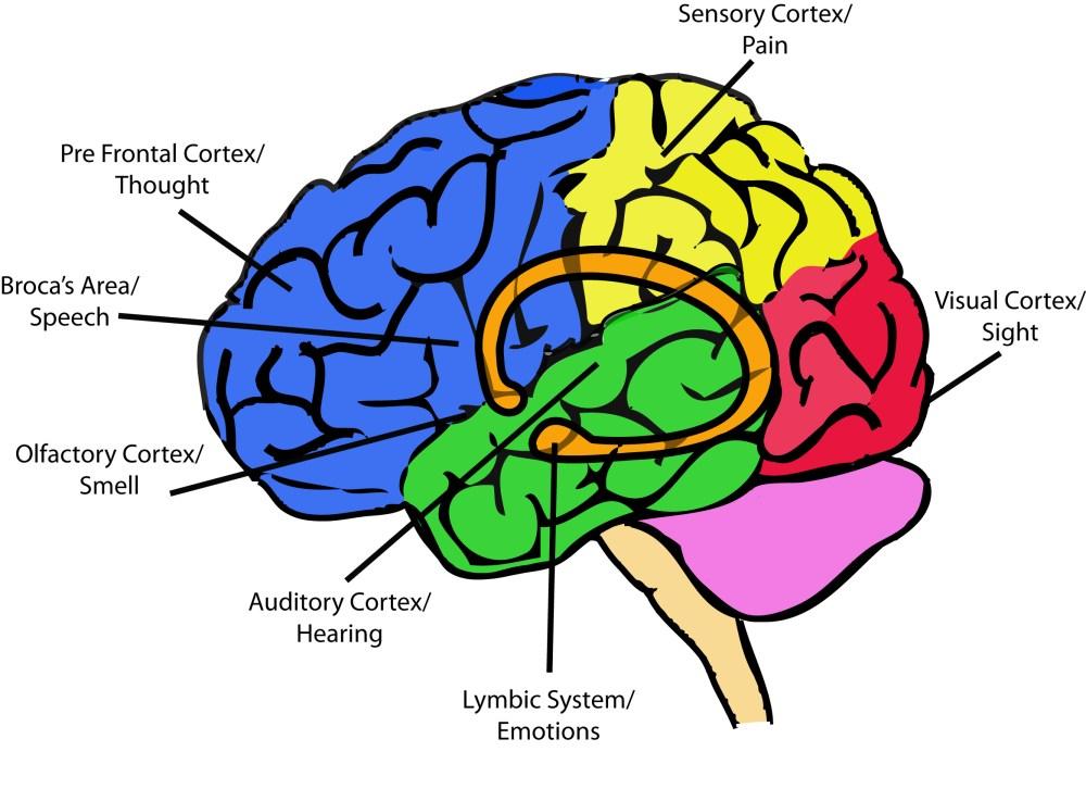 medium resolution of psychology today