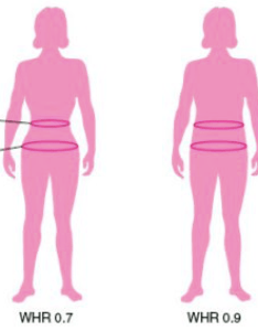 The relationship between waist hip ratio and fertility psychology today also rh psychologytoday