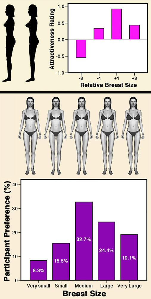 Breast Sizes Small To Large : breast, sizes, small, large, Important, Breast, Attraction?, Psychology, Today