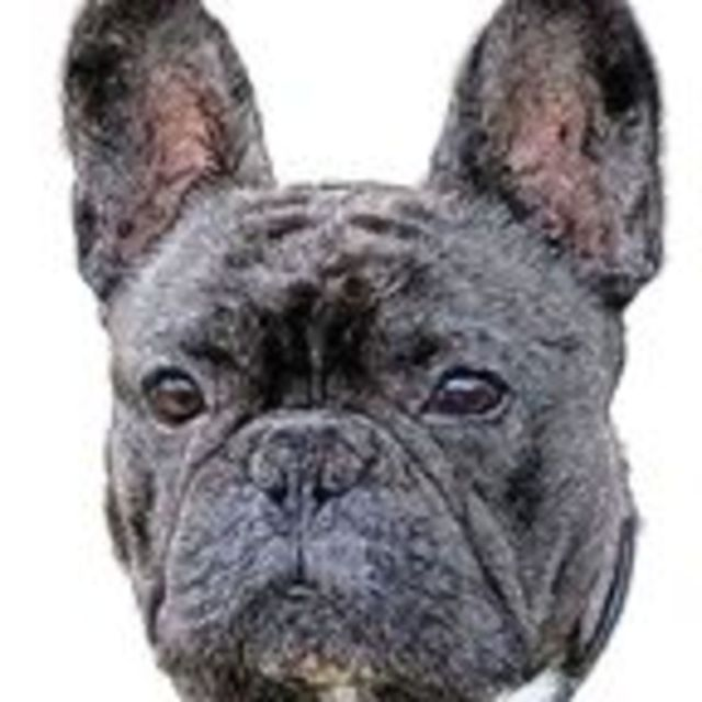 what shape is your dog's ear? | psychology today hong kong