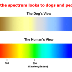 Canine Eye Diagram Lutron Sc 3 Can Dogs See Colors? | Psychology Today