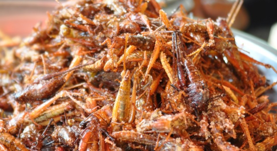 Image result for eating crickets