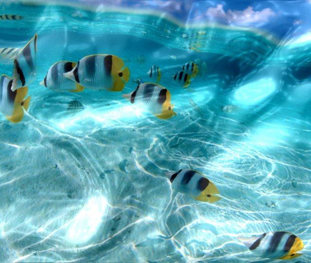 Watery Desktop D