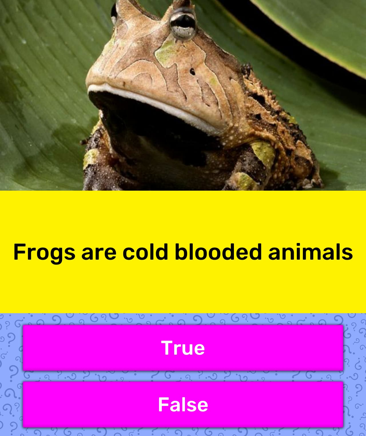 Frogs Are Cold Blooded Animals
