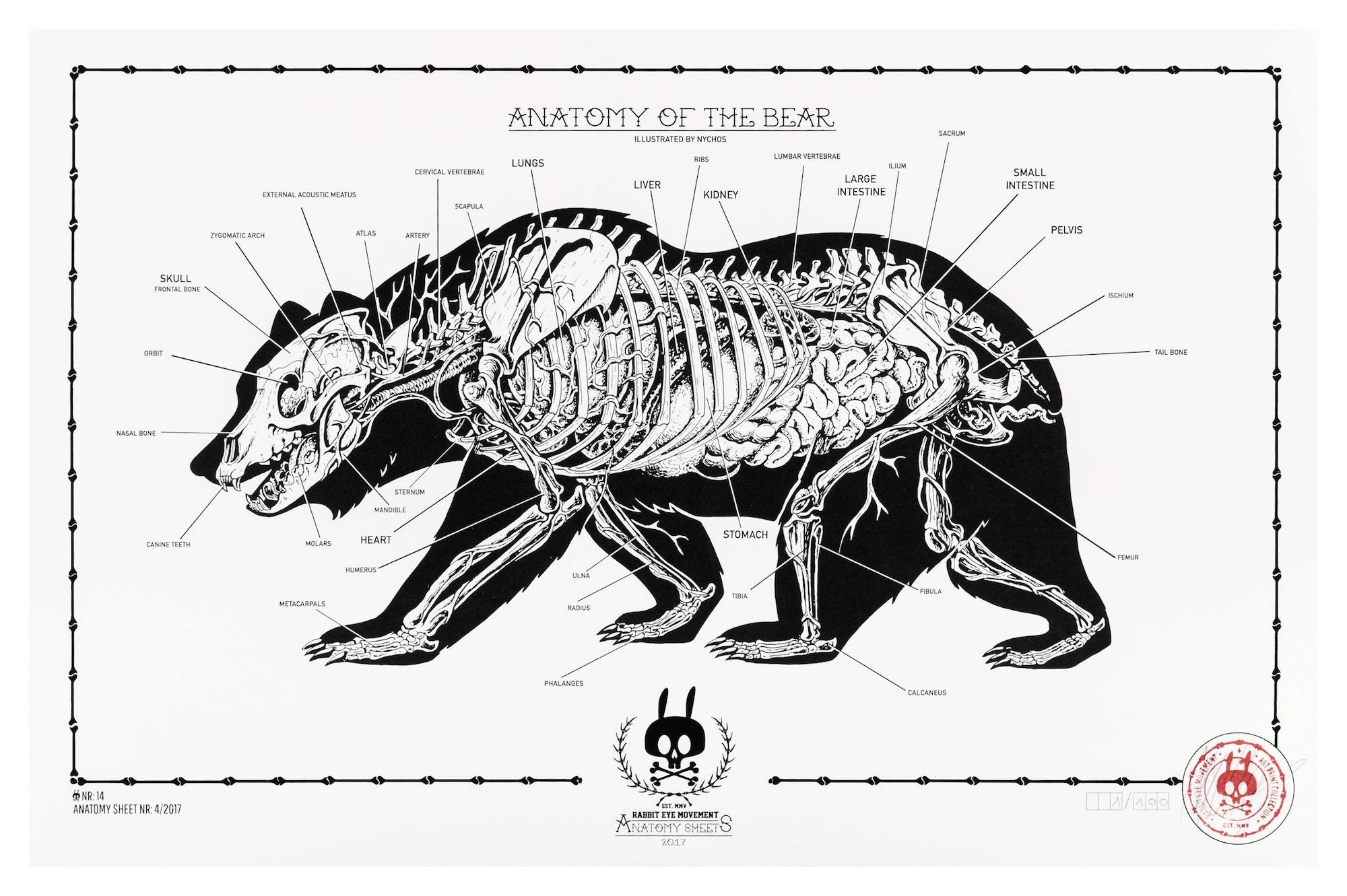 rabbit skeleton diagram ford hei distributor wiring anatomy of the bear: sheet no.14 - eye movement inc.