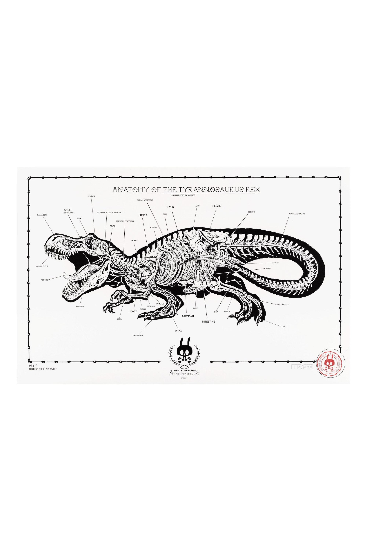 Anatomy Of The Tyrannosaurus Rex Anatomy Sheet No 17