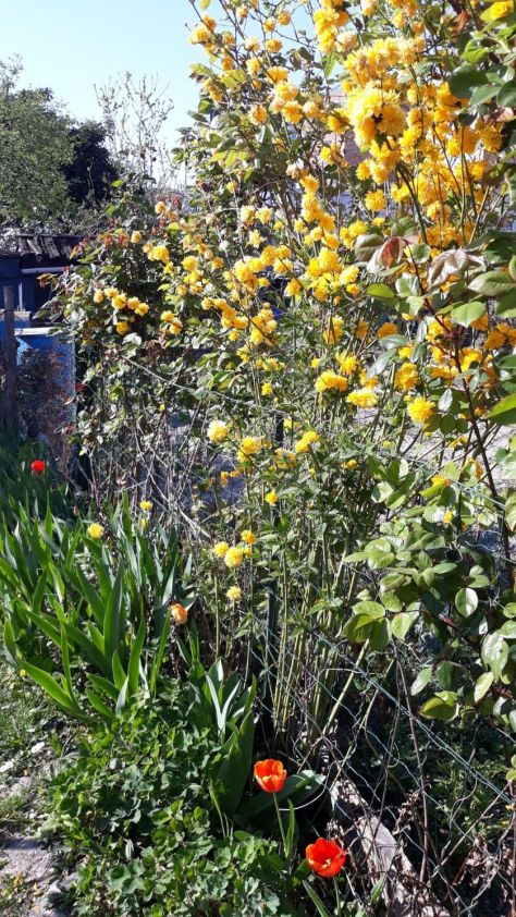 Jardins des vertus à Aubervilliers, avril 2020