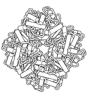 PDB-101: Learn: Coloring Books: Coloring Molecular Machinery