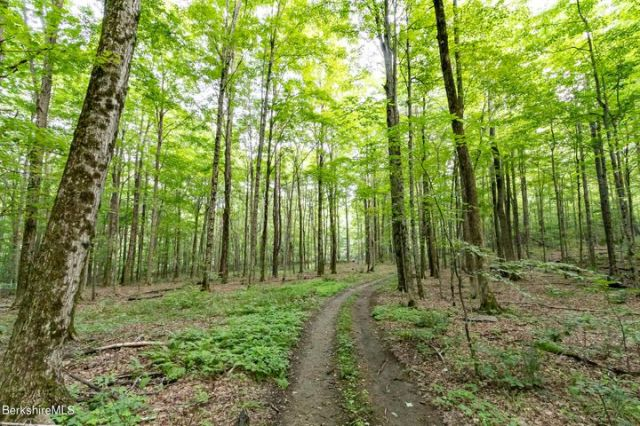 Gorgeous open woodland