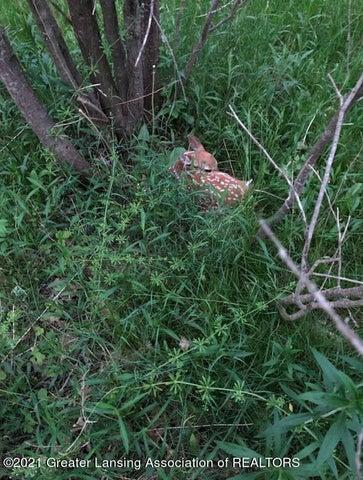 back yard wildlife