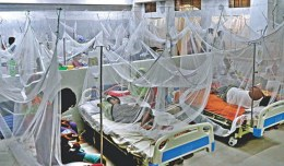 266 more dengue patients hospitalised in 24 hrs