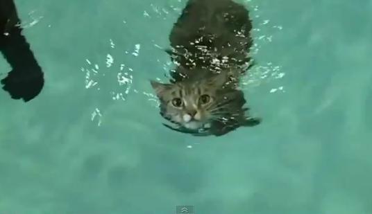 Mog il gatto semiparalizzato che impara a nuotare per