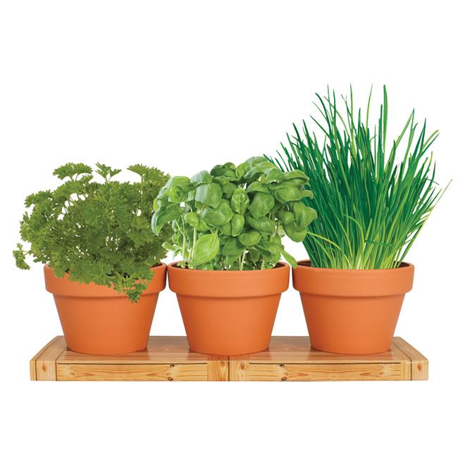 kitchen herb kit small white sinks totalgreen indoor trio grow bulbs 76703200 1 rona