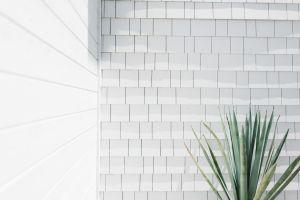zoom backgrounds minimal unsplash virtual plant wall meetings