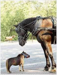 Le Plus Petit Cheval Du Monde : petit, cheval, monde, Petit, Cheval, Monde, Impressionnant