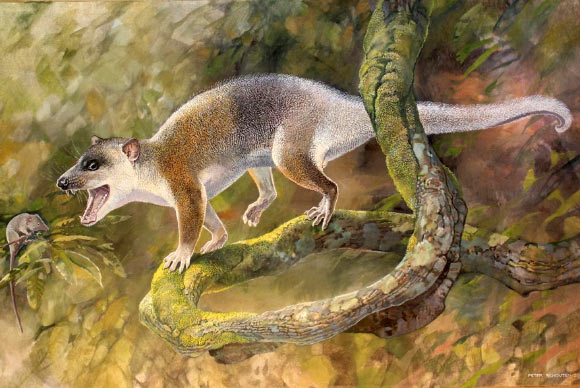 An artist's reconstruction of Anatoliadelphys maasae. Image credit: Peter Schouten.