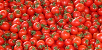 Gao et al present a tomato pan-genome constructed using genome sequences of 725 phylogenetically and geographically representative accessions, revealing 4,873 genes absent from the reference genome. Image credit: Hans Braxmeier.