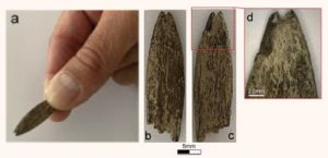 Archaeologists have discovered an artifact of rare bones in Australia  Archeology