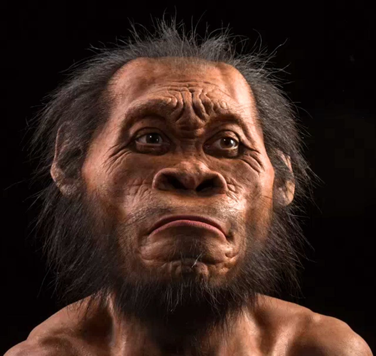 hight resolution of homo naledi new species of human ancestor discovered anthropology rh sci news com acne diagram pimples