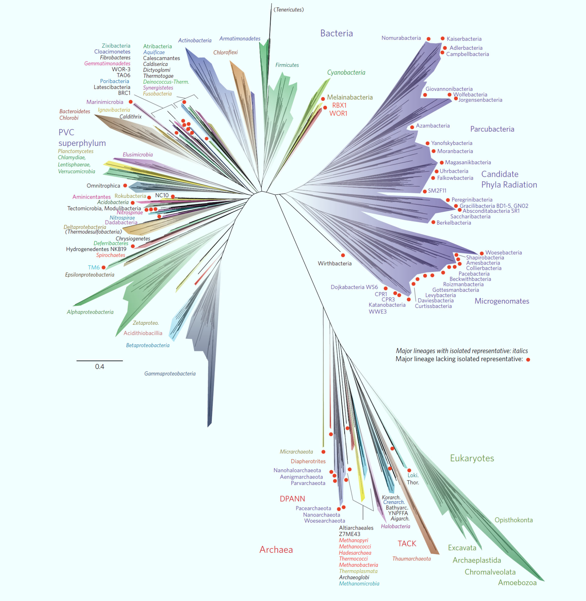 Symphy Researchers Propose New Tree Of Life Framework