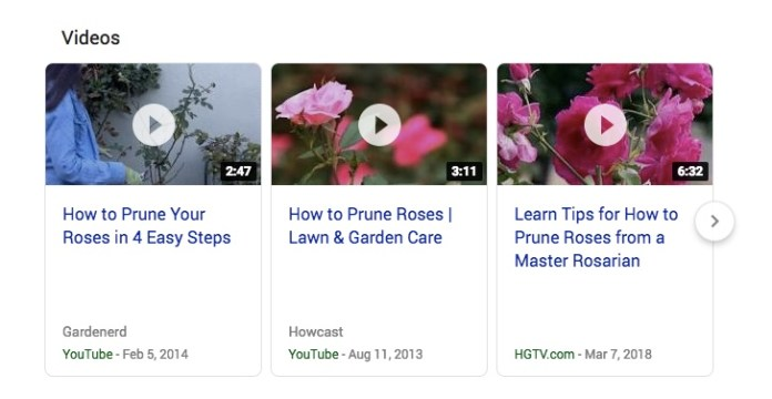 roses SERPs