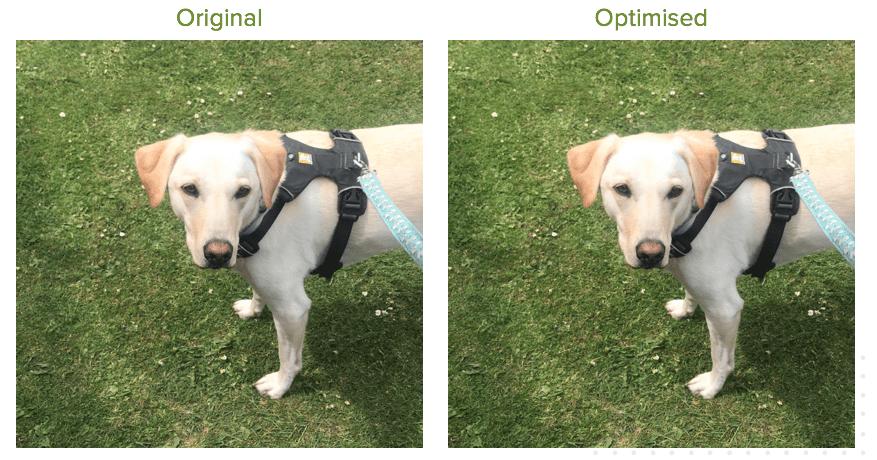 Image Compression Original and Optimised