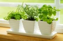https://herbgardeningonlineguide.com/fresh-herb-gardening/