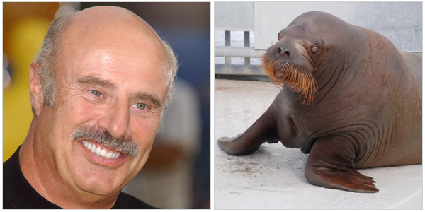 Dr. Phil and a walrus