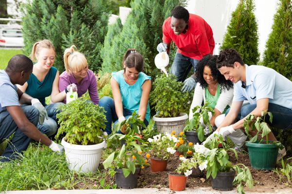 coltivare l'orto come attività di gruppo