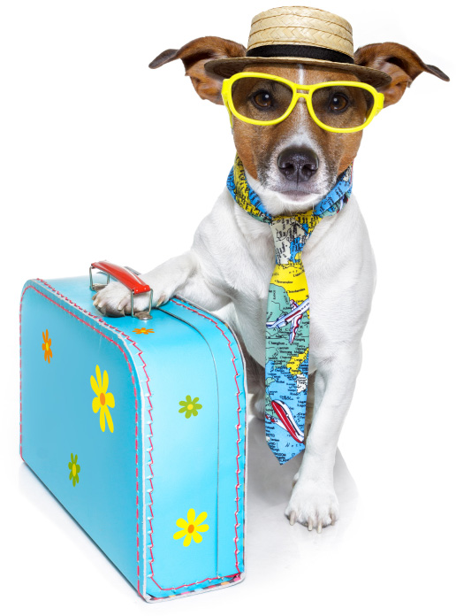 https://i0.wp.com/cdn.sheknows.com/articles/2013/05/isolated-dog-suitcase.jpg