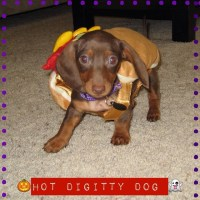 Who wore it best? Choose which weiner dog makes the best ...
