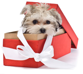 Do Pets Make Good Gifts For The Holidays
