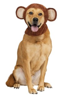 Monkey ears for dogs | Animal Dog Costume for the four ...