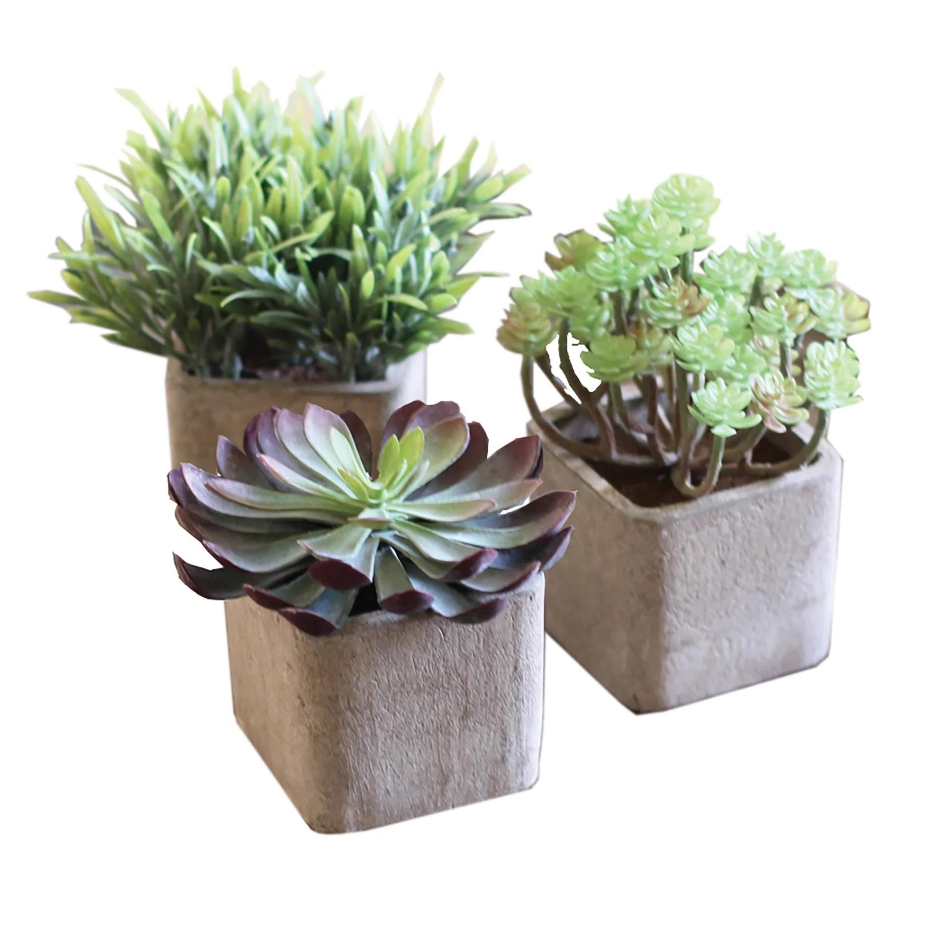Modern Artificial Succulent Plants in Pots  Set of 3