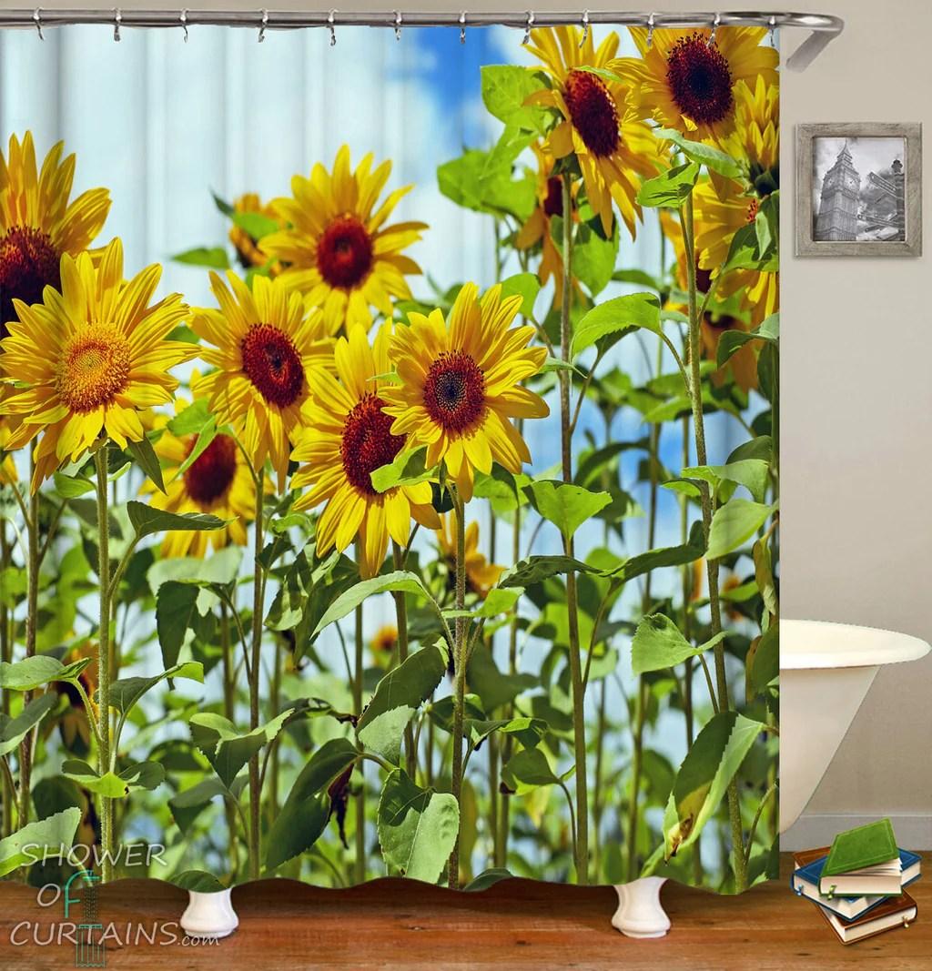 long stems sunflowers