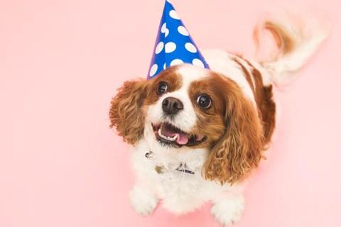 Happy Party Puppy