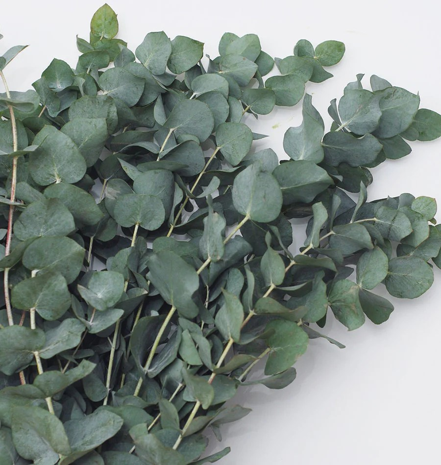 Use this ielts reading sample for ielts reading practice: How to Grow Eucalyptus from Seeds - West Coast Seeds