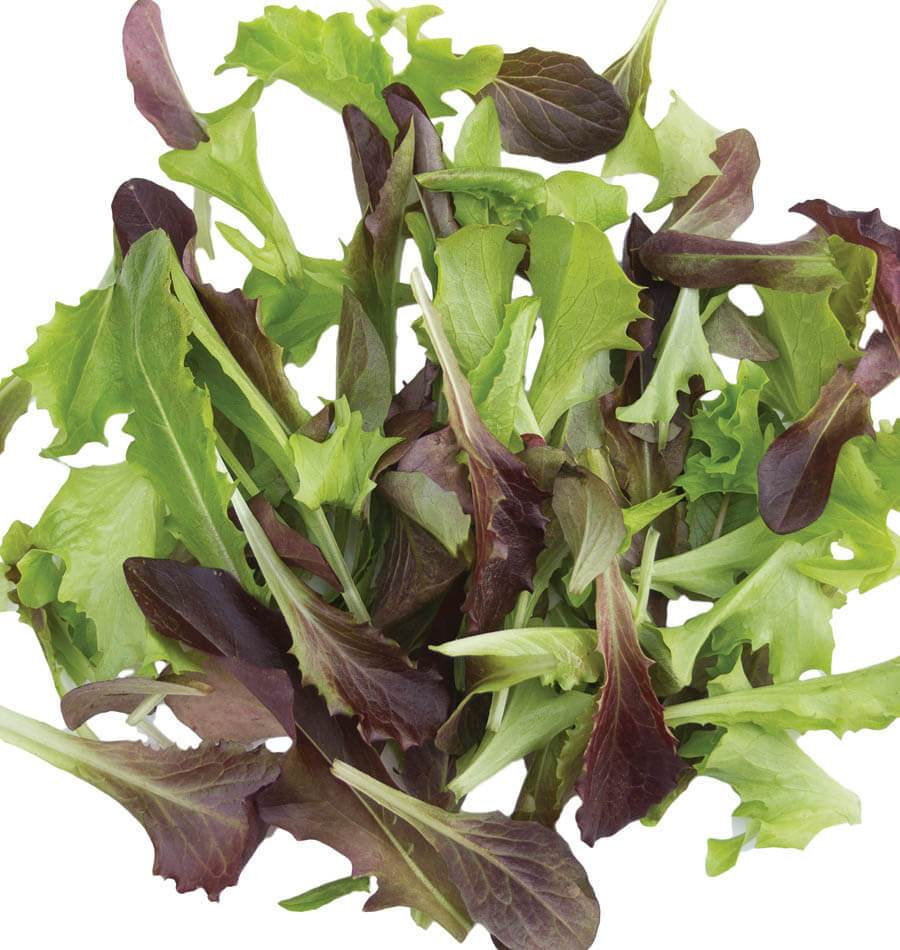 Fast and Furious Blend Organic Lettuce Seeds  West Coast