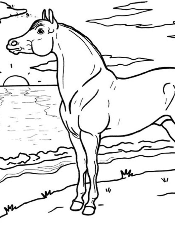 Breyer Horse Coloring Pages : breyer, horse, coloring, pages, Coloring, Pages, Tagged,