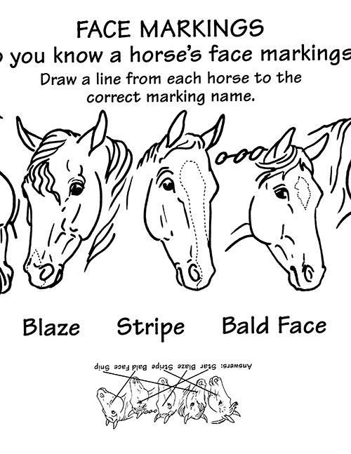 Breyer Horse Coloring Pages : breyer, horse, coloring, pages, Coloring, Pages, BreyerHorses.com