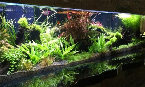 aquascapes custom designed turn