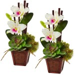 Cattleya Orchid And Succulent Arrangement Set Of 2 White Timeless Leaves